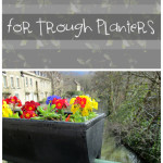 12 Tips for Trough Planters (1)