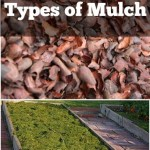 Get the Dirt on Different Types of Mulch