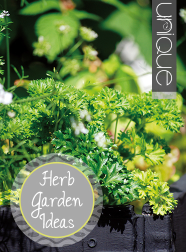 Unique Ideas For Herb Gardens Indoor And Out