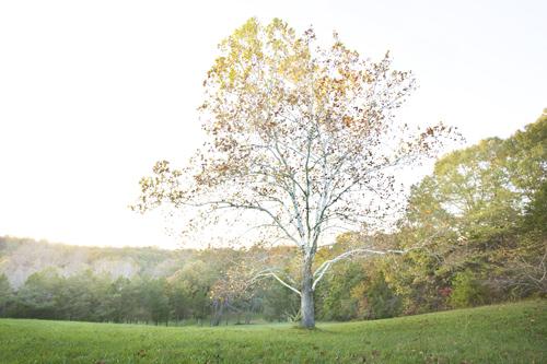 12 Fast Growing Shade Trees  Fast Growing Trees, Fast Growing Trees for Privacy, Trees, Trees for Privacy, DIY Garden Ideas, Backyard Garden Ideas, Gardening Design, Landscape Ideas, Landscaping Ideas, Landscaping Backyard #ShadeTrees #FastGrowingShadeTrees #FastGrowingShadeTreesforPrivacy