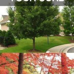 10 Perfect Trees For Your Curb