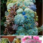 12 Amazing Succulent Arrangements