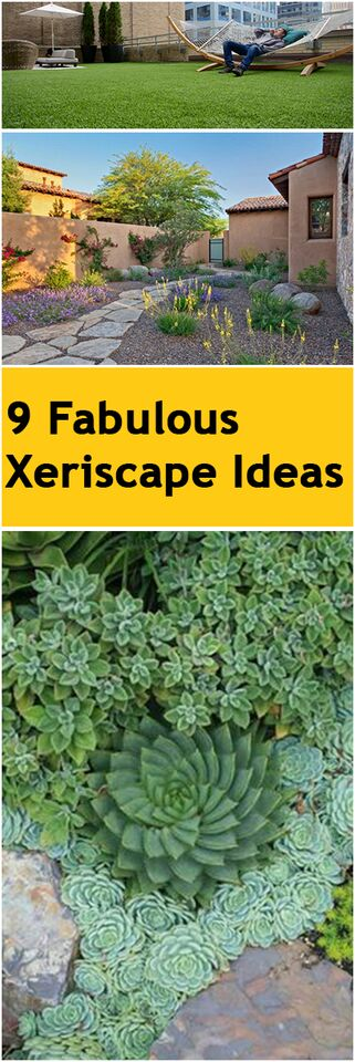 9 Fabulous Xeriscape Ideas ~ Bless My Weeds on Xeriscape Yard Ideas id=22222