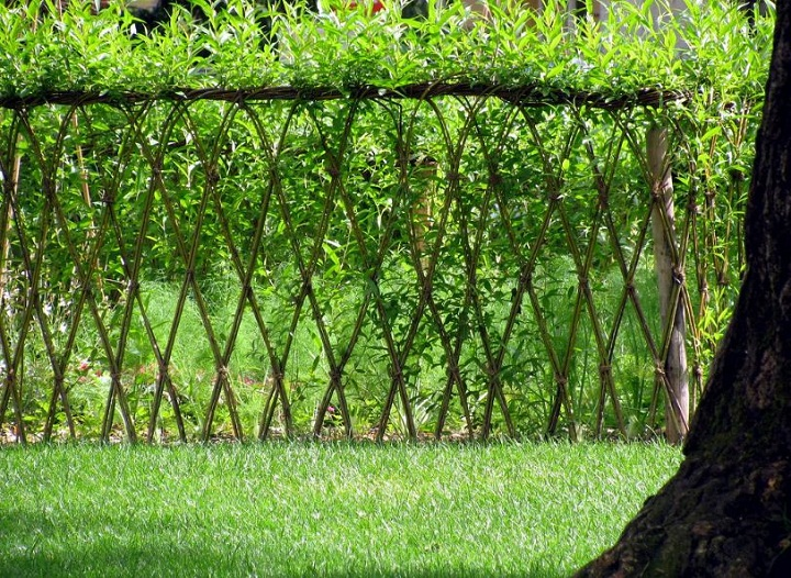 Living Fence and Plant Ideas
