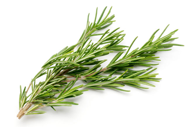 The 5 Easiest Herbs to Grow
