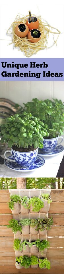 herb gardening diy herb gardening indoor herb garden ideas popular pin gardening