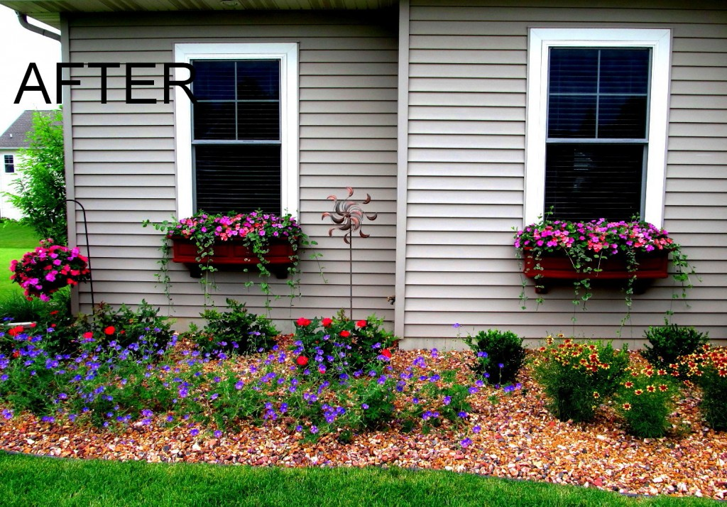 Photo from Window Box Contest