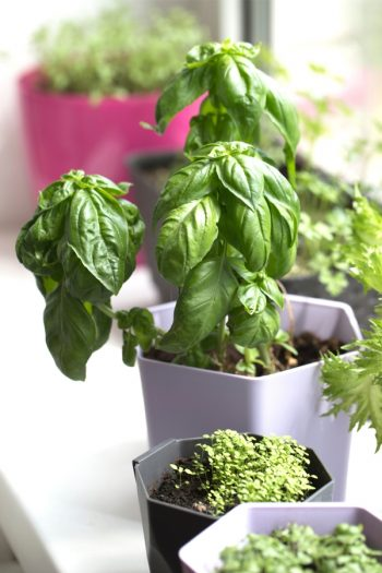 Here are some unique herb garden ideas for anyone who wants to try herb gardening at home. Herb gardening is great for home cooks! These containers make growing herbs so much easier.