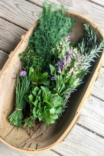 Here are some unique herb garden ideas for anyone who wants to try herb gardening at home. Herb gardening is great for home cooks! Don't miss these unique ideas!