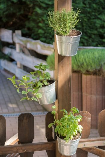 Here are some unique herb garden ideas for anyone who wants to try herb gardening at home. Herb gardening is great for home cooks! We even have ideas on how to grow herbs in small places.
