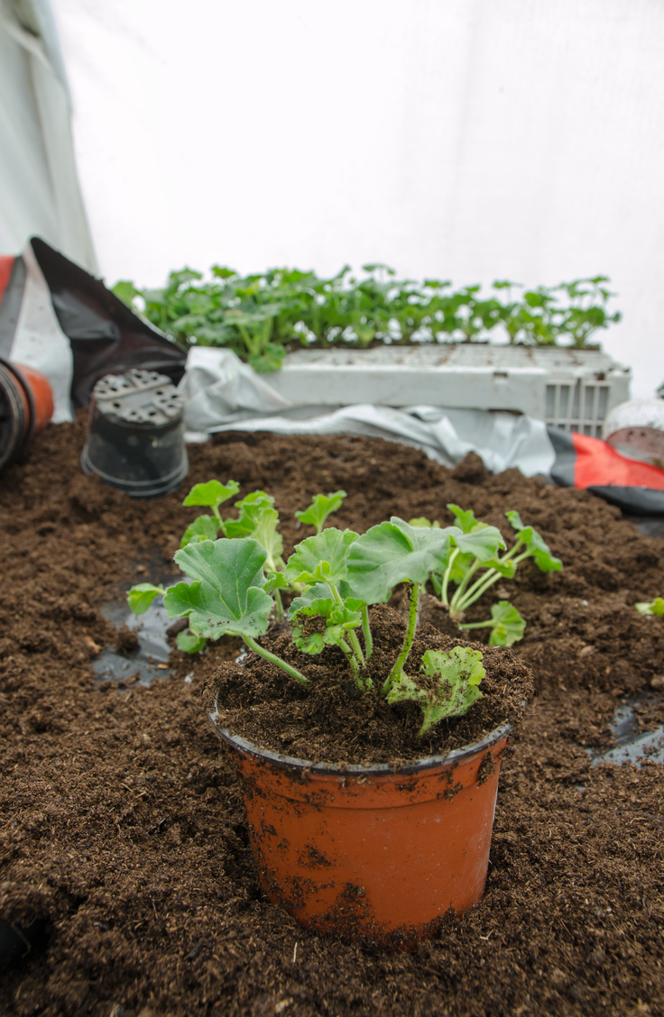 Here are 20 insanely clever gardening tips and hacks that make gardening easier. Make sure you have some transplantable pots on hand!