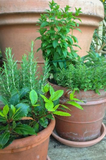 Here are some unique herb garden ideas for anyone who wants to try herb gardening at home. Herb gardening is great for home cooks! Clay pots are always a great container for herbs.