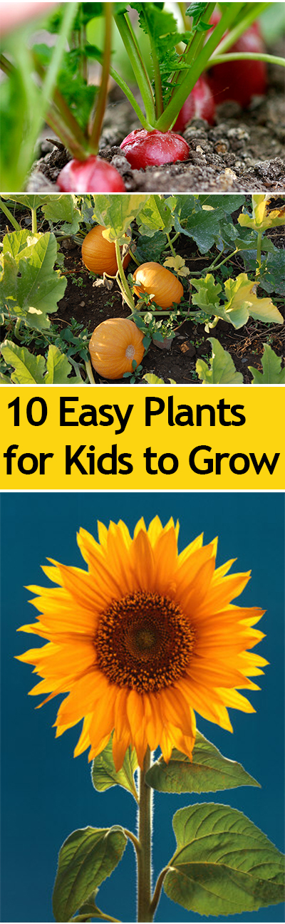 10 Easy Plants for Kids to Grow