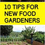 10 Tips For New Food Gardeners