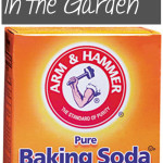 10 Ways to Use Baking Soda in the Garden. Baking Soda, Gardening With Baking Soda, Garden, Gardening Tips and Tricks, Natural Living, Natural Gardening Tips. #gardening #naturalpestcontrol #garden #outdoorDIY #DIYgarden