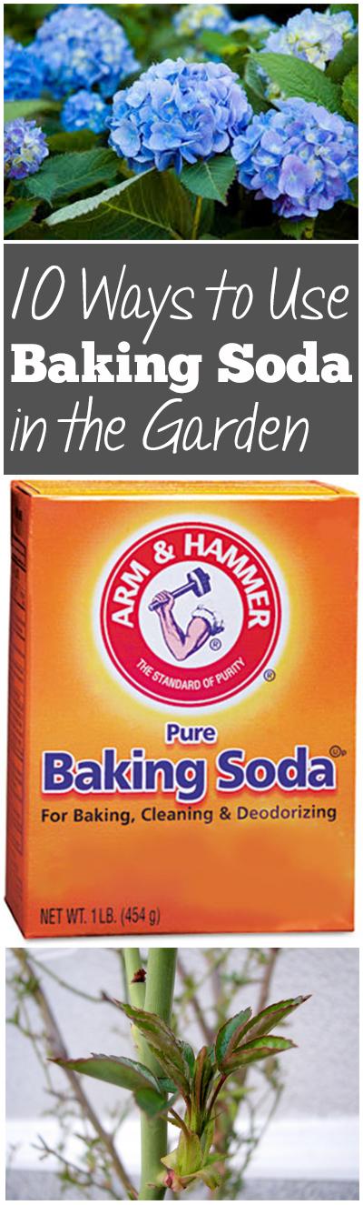 Baking soda, gardening with baking soda, baking soda hacks, popular pin, gardening hacks, gardening tips and tricks, outdoor living