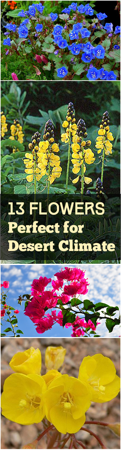 13 Flowers Perfect for Desert Climate
