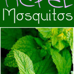 Natural pest control, gardening hacks, garden pest control, tips and tricks, gardening tips and tricks, popular pin, mosquito repellent, natural mosquito repellent