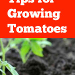 Tomato gardening, gardening tomatoes, tomato gardening tips, popular pin, gardening, vegetable gardening tips, vegetable gardening hacks.