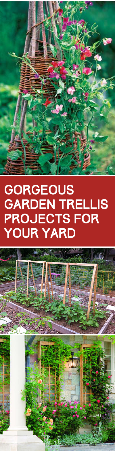 Gorgeous Garden Trellis Projects for Your Yard