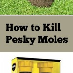 Natural pest control, mole control, pest control, getting rid of moles and voles, gardening hacks, garden pest control, tips and tricks, gardening tips and tricks, popular pin