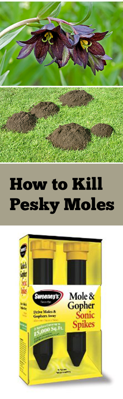 How to kill pesky moles bless my weeds - Fight weeds with organic solutions practical tips in the garden ...
