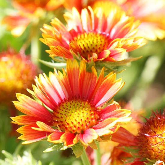15 Most Colorful Perennials For Your Yard Page 2 Of 16