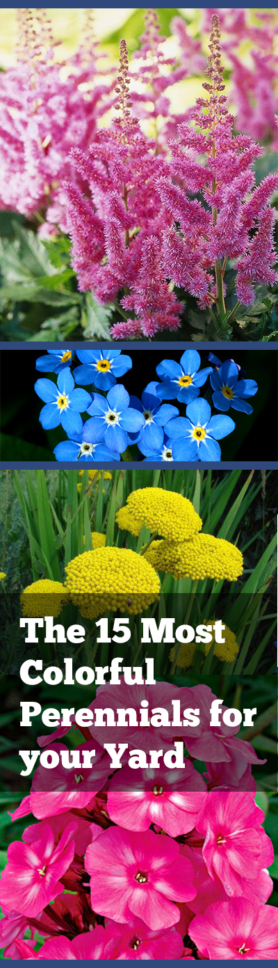 The 15 Most Colorful Perennials for Your Yard| Perennial Garden Ideas, Perennial Flowers, Perennial Garden, Flower Garden, Flower Gardening, Flower Gardening Ideas, Front Garden Ideas. Flower Gardening for Beginners, Landscape Ideas, Landscaping Ideas, Landscaping Backyard #FlowerGardeningIdeas #FlowerGardeningforBeginners #PerennialGardenIdeas #PerennialGarden