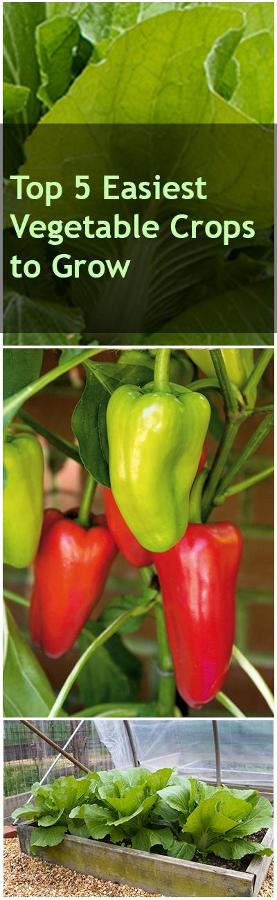 Top 5 Easiest Vegetable Crops to Grow