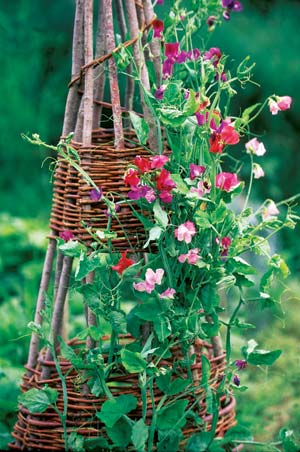 DIY garden trellis make from limbs
