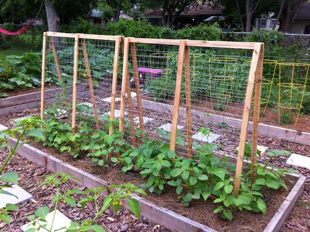 A frame made from wood and wire to create a DIY garden trellis