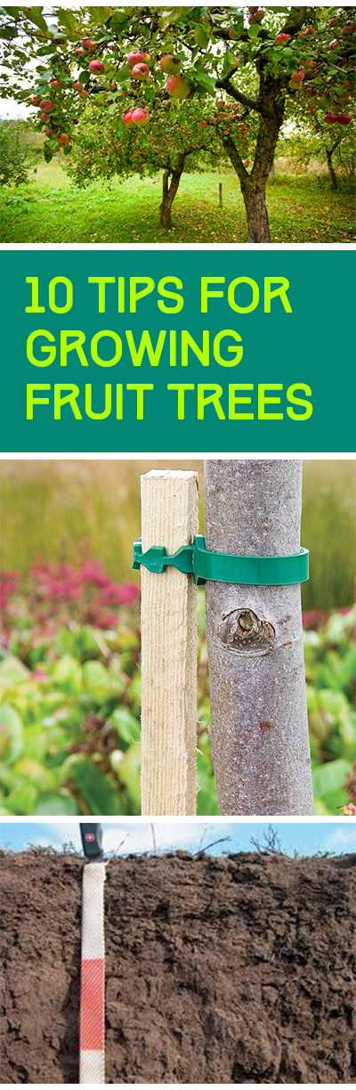 Gardening, home garden, garden hacks, garden tips and tricks, growing plants, gardening DIYs, gardening crafts, popular pin, backyard hacks, backyard tips and tricks, outdoor living, home and garden, fruit gardening, fruit growing tips, container gardening