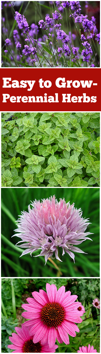 Easy to Grow- Perennial Herbs