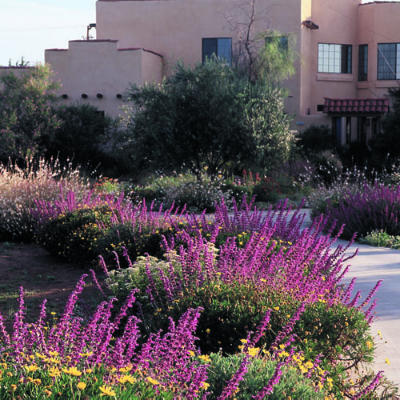Landscaping15
