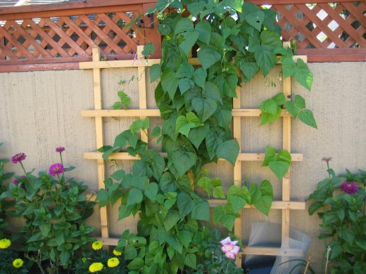 15 creative vertical gardening designs page 14 of 16