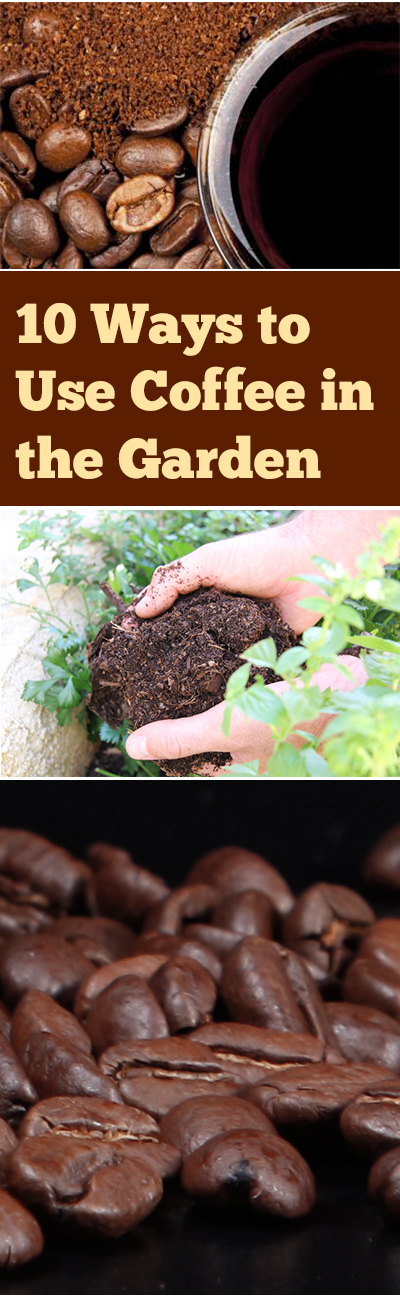 Coffee, gardening with coffee, gardening hacks, popular pin, how to use coffee in the garden, tips and tricks, vegetable growing tips, fruit growing hacks, natural pesticides, organic gardening.