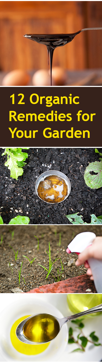 Organic garden remedies, organic gardening, natural gardening, popular pin, gardening hacks, garden remedies, gardening, beginner gardening tips.