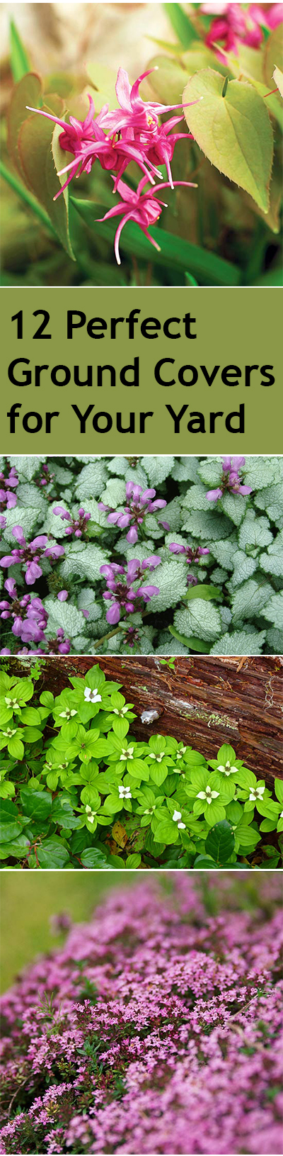 12 Perfect Ground Cover for Your Yard| Ground Cover, Ground Cover Plants, Ground Cover Plants for Sun, Ground Cover Plants Shade, Gardening Ideas, Gardening Design, Backyard Gardening, Garden Design,  Garden Tips, Outdoor DIY, Outdoor Patio Ideas, Outdoor Ideas #GroundCover #GroundCoverIdeas #GroundCoverPlants #GardeningDesign #GroundCoverPlants