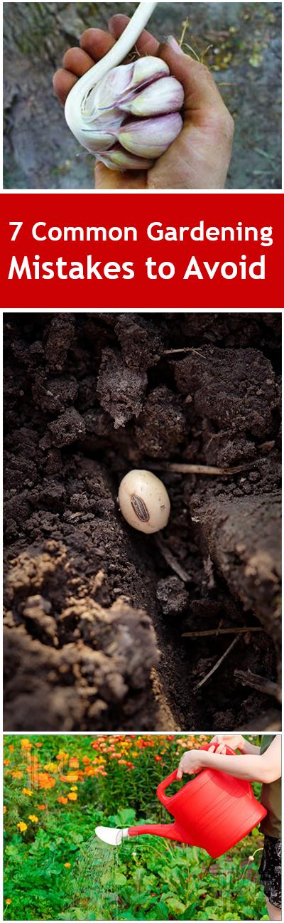 Gardening mistakes, mistakes to avoid, gardening, gardening hacks, tips and tricks, outdoor living.
