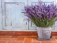 Easy Tips for Growing Lavender. Growing Lavender, Indoor Garden, Gardening, Gardening 101, Container Garden. #containergarden #gardening #indoorgardening #growinglavender #garden