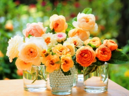 How to Get Your Roses to Bloom  Rose Garden, Rose Garden Ideas, Rose Garden Design, Rose Garden Landscape, Flower Garden, Flower Garden Ideas, Flower Gardening, Flower Gardening Ideas, Flower Gardening for Beginners #RoseGardenIdeas #RoseGardenDesign