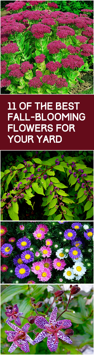 11 Of the Best Fall Blooming Flowers for Your Yard| Fall Blooming Flowers, Fall Blooming Perennials, Fall Blooming Bulbs, Fall Blooming Plants, Flower Gardening, Flower Gardening for Beginners, Fall Garden, Fall Gardening, Garden Ideas, Flower Garden Ideas #FallBloomingFlowers #FallBloomingPerennials #FallBloomingBulbs