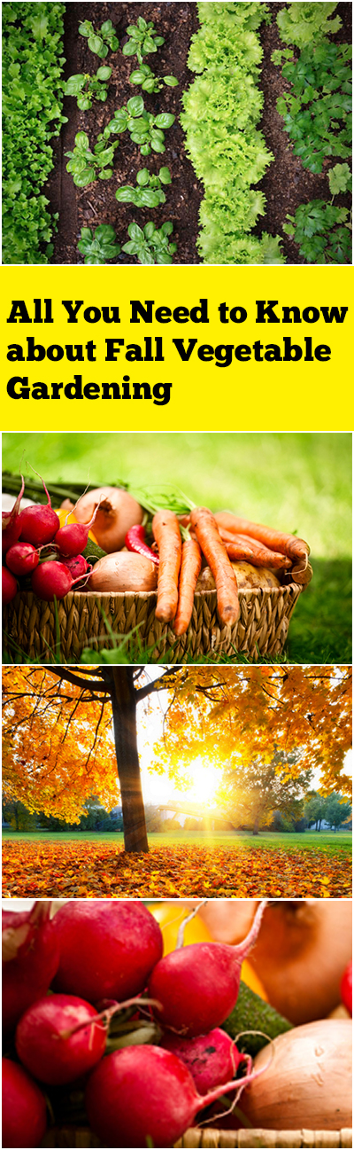 All You Need to Know about Fall Vegetable Gardening| Vegetable Gardening, Vegetable Garden, Vegetable Gardening Ideas, Vegetable Garden Ideas, Gardening, Gardening, DIY Garden Ideas, DIY Gardening Ideas, Vegetable Gardening for Beginners #VegetableGardening #VegetableGardenIdeas #VegetableGardeningforBeginners