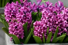 15 Plants That Give You the Most Bang for Your Buck  Cheap Garden Ideas, Inexpensive Garden Ideas, Inexpensive Gardening, Garden Ideas, Garden Design, Backyard Garden, Flower Garden, Gardening for Beginners, Flower Gardening for Beginners #CheapGardenIdeas #InexpensiveGardening #FlowerGarden #GardenIdeas