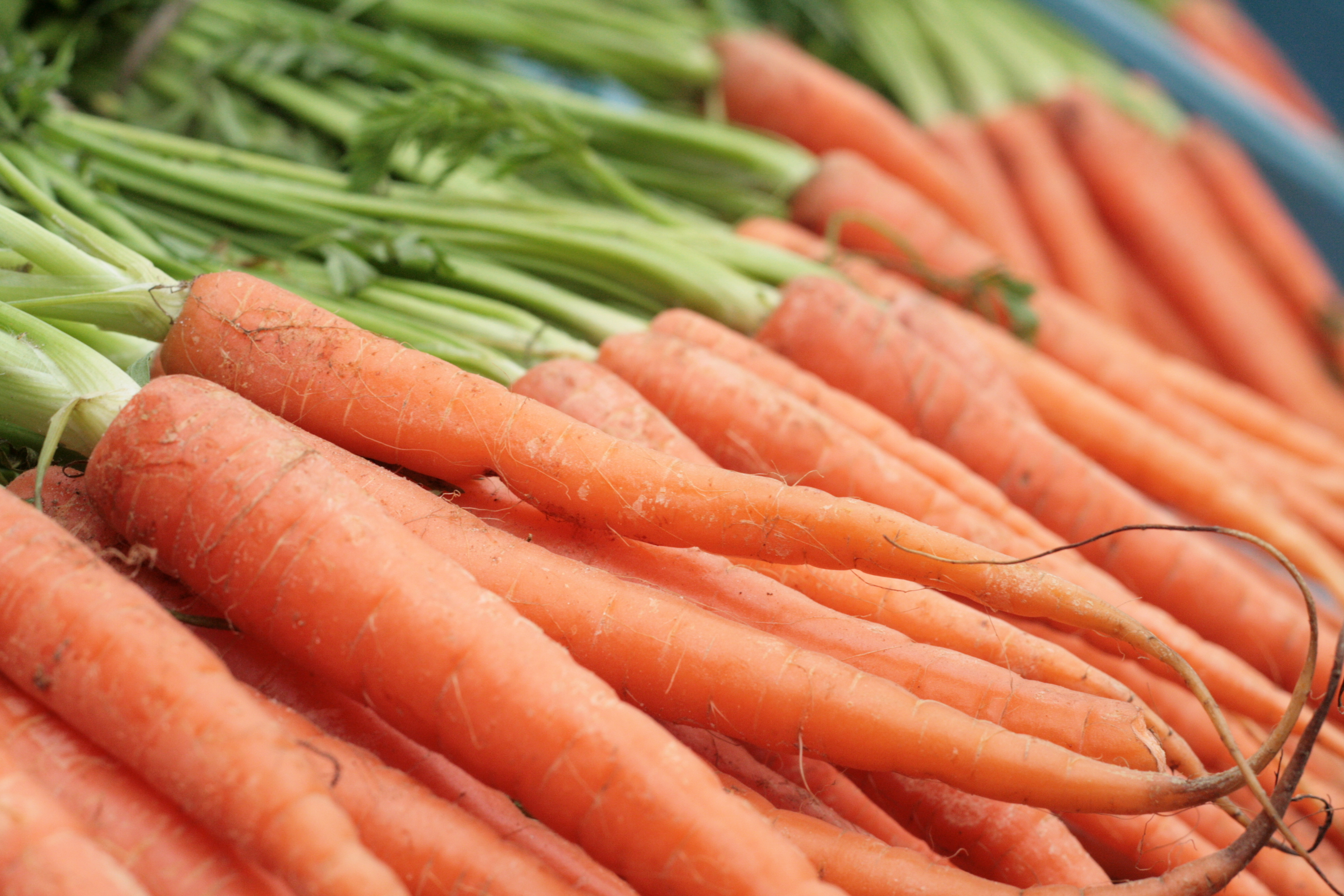 10 Veggies that are Perfect for Fall Planting| Vegetable Garden, Vegetable Gardening, Vegetable Gardening for Beginners, Garden Ideas, Fall Garden Ideas, Fall Gardening Ideas, Fall Garden Vegetables, Vegetable Garden, Vegetable Garden Ideas, Vegetable Gardening for Beginners