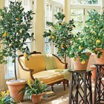 How to Grow Indoor Tropical Plants| Indoor Plants, Indoor Garden, Indoor Gardening, Indoor Tree Gardening, Gardening, Gardening Ideas, Garden Ideas, Indoor Gardening for Beginners, Indoor Garden Apartment #IndoorGarden #IndoorGardening #GardenIdeas #IndoorGardenApartment