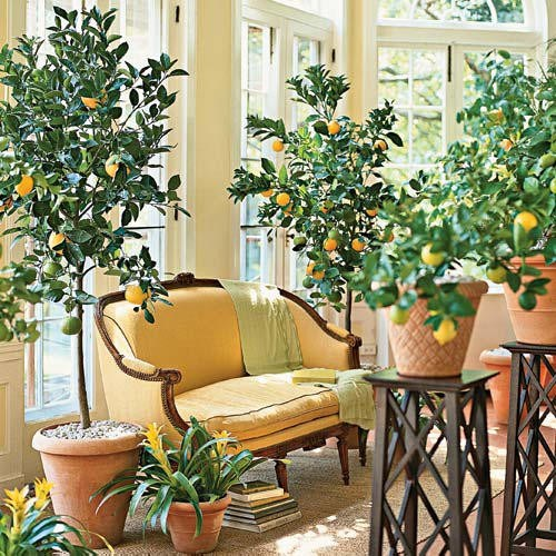 how to grow tropical indoor plants