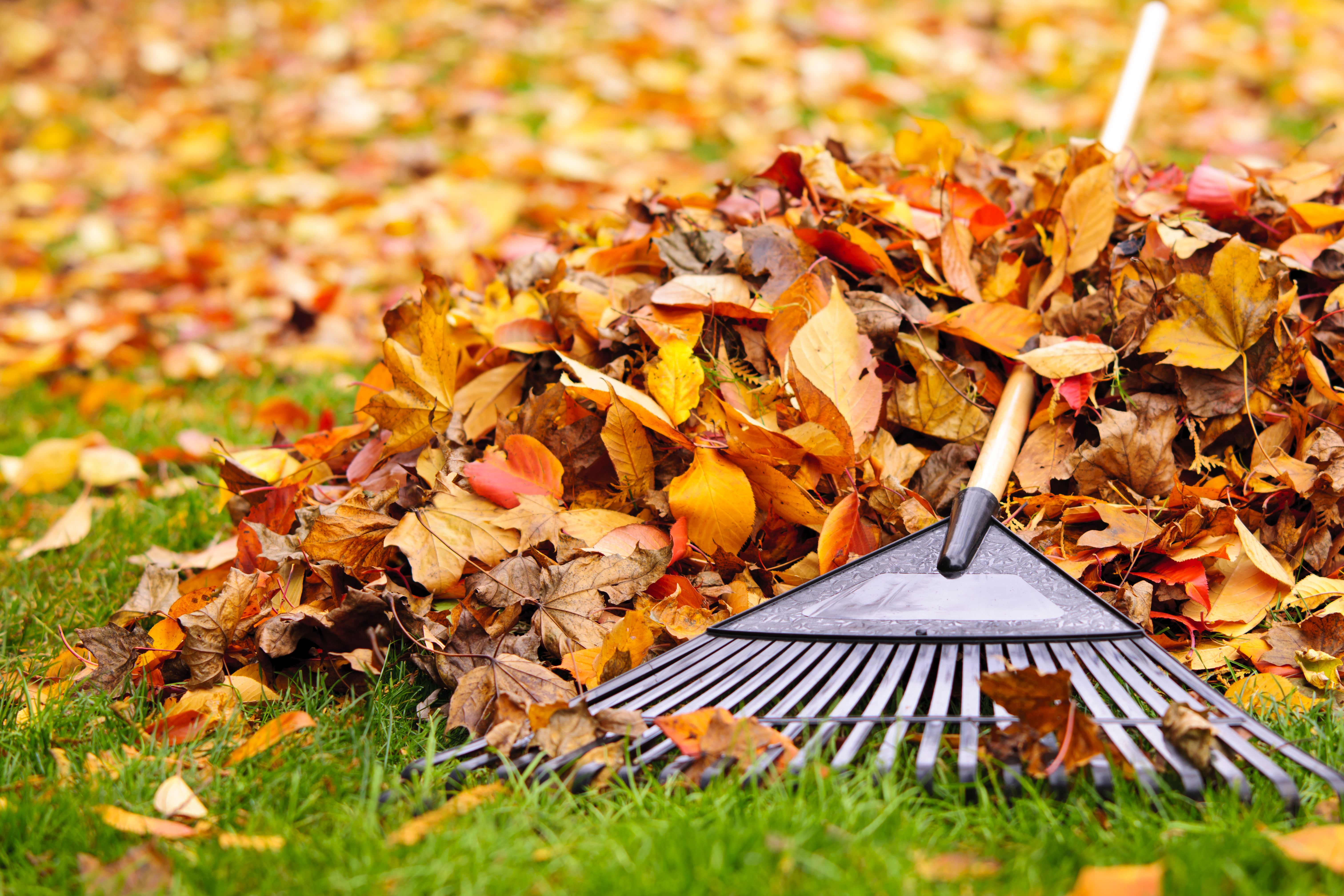 10 Fall Yard Projects to Get Your Yard Ready for Winter| Fall Garden, Fall Gardening, Fall Gardening Ideas, Winter Garden, Winter Gardening, Gardening Chores, Popular Pin #GardeningChores #FallGardeningIdeas #WinterGardening