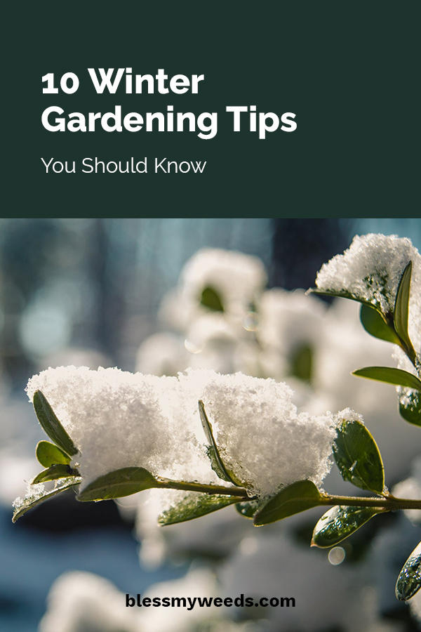 10 Winter Gardening Tips You Should Know Bless My Weeds