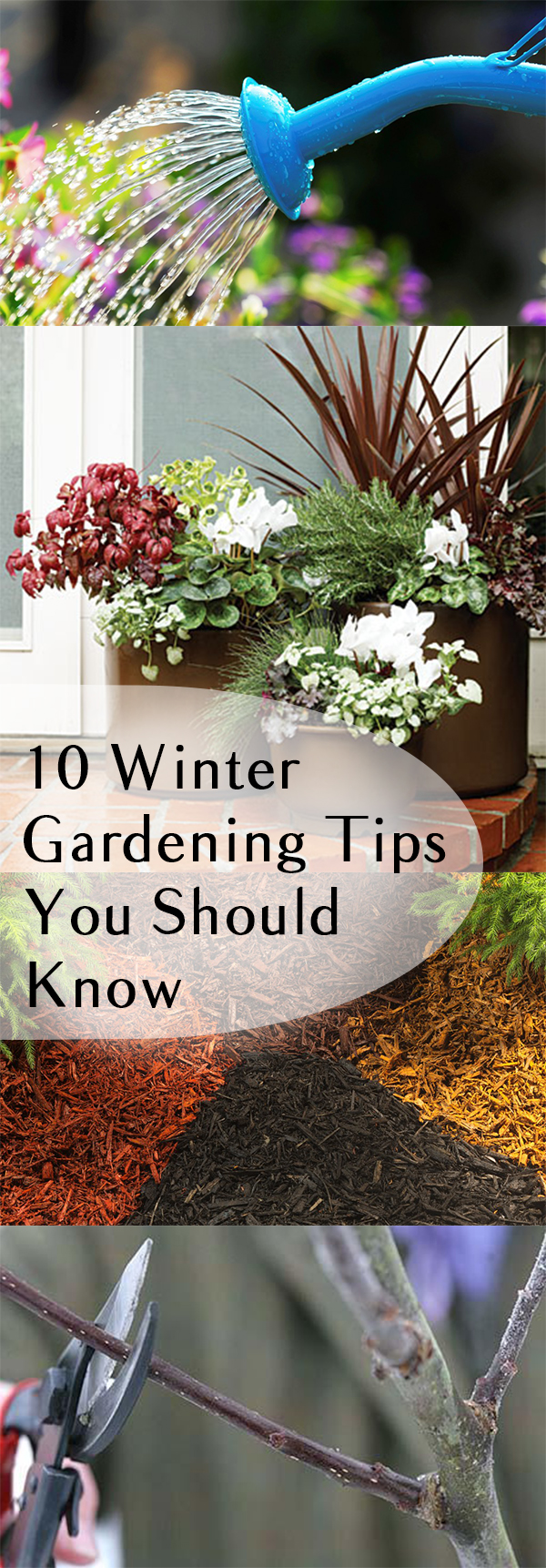 10 Winter Gardening Tips You Should Know| Winter Gardening, Winter Gardening Tips, Winter Gardening Vegetables, Winter Gardening Tips, Winter Gardening Outdoor, Winter Gardening Indoors, Garden Ideas, Gardening Ideas, Gardening Tips, Gardening for Beginners #WinterGardeningVegetables #WinterGardeningTips